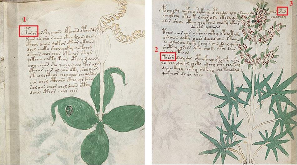 voynich-manuscript-top-most-unsolved-mysteries-of-the-world-2017