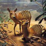 Top 10 Strange Animals In The World