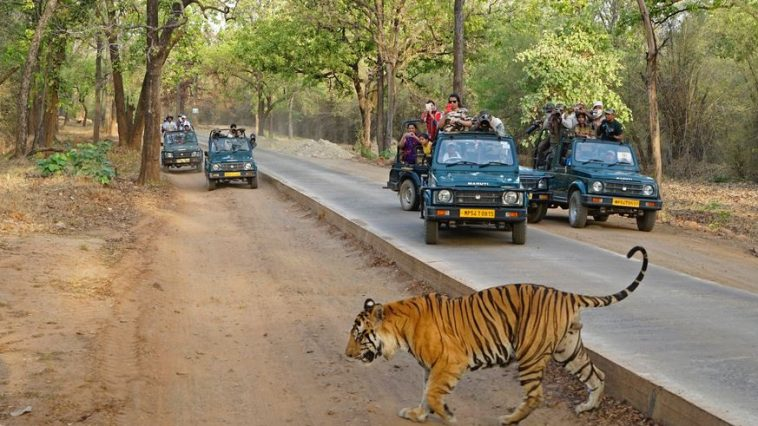 BANDHAVGARH NATIONAL PARK Top Most Famous Wildlife Reserves in The World 2018