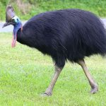 Top 10 Most Beautiful Flightless Birds In The World