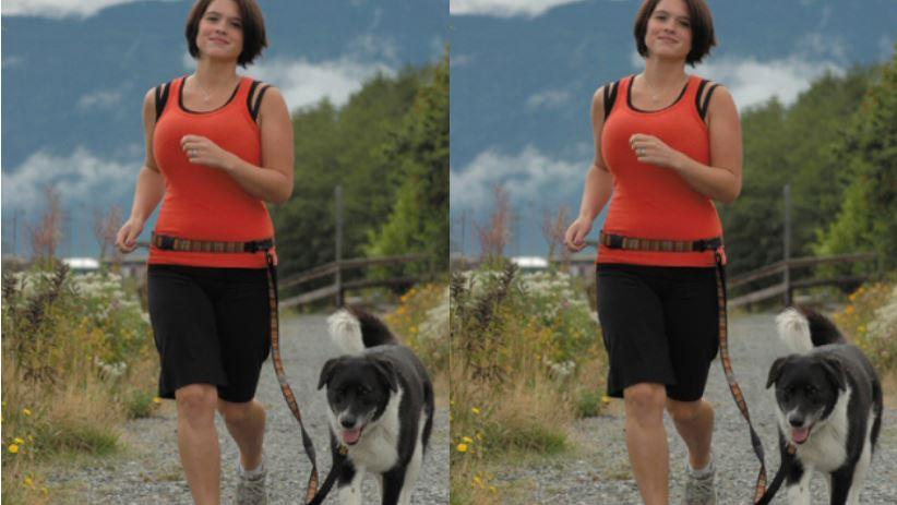 Dog Safety Leash Belt