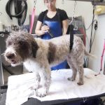 Top 10 Best Selling Dog Groomers Reviews
