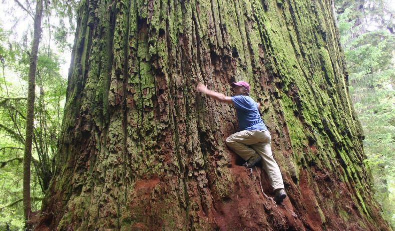 Climbs a tree everyday- Simon Cowell